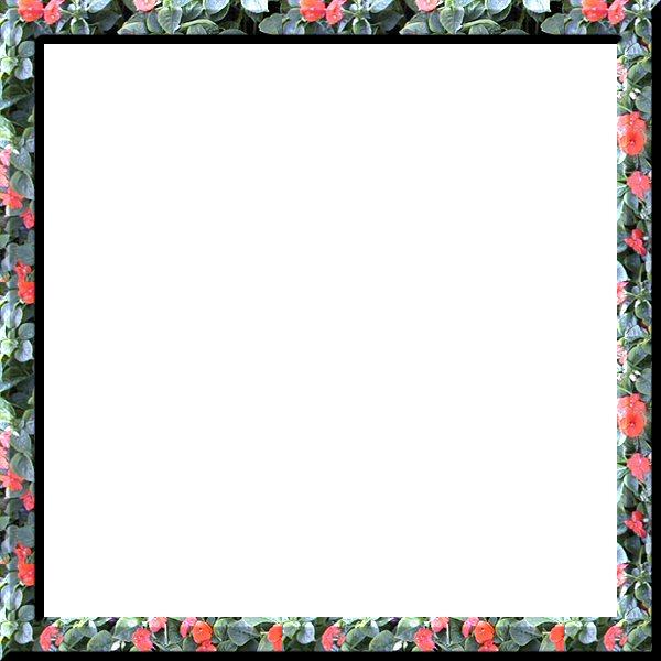 Liz\'s PSP Frames